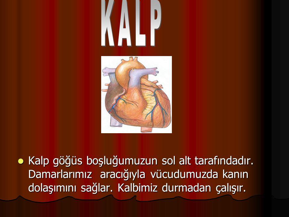 KALP Kalp göğüs boşluğumuzun sol alt tarafındadır.
