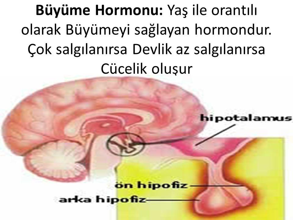Büyüme Hormonu: Yaş ile orantılı olarak Büyümeyi sağlayan hormondur