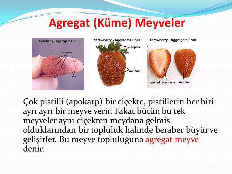 Agregat (Küme) Meyveler