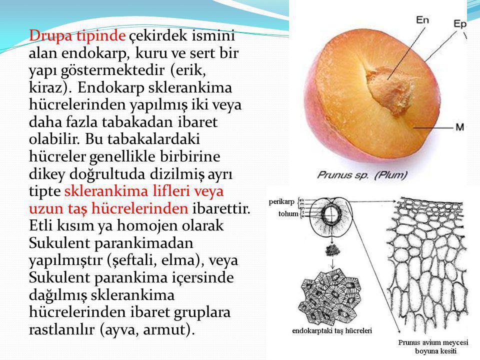 Drupa tipinde çekirdek ismini alan endokarp, kuru ve sert bir yapı göstermektedir (erik, kiraz).