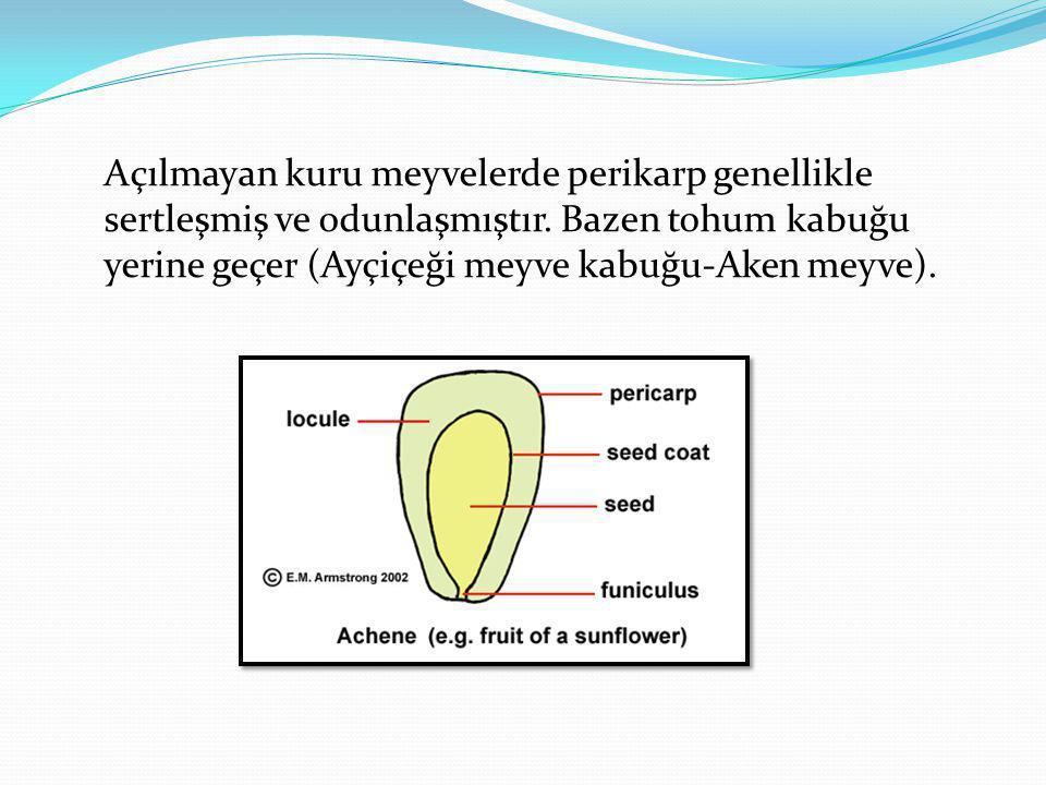 Açılmayan kuru meyvelerde perikarp genellikle sertleşmiş ve odunlaşmıştır.