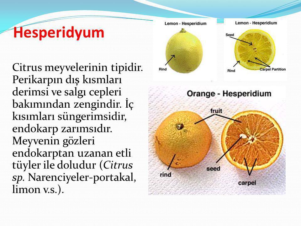 Hesperidyum