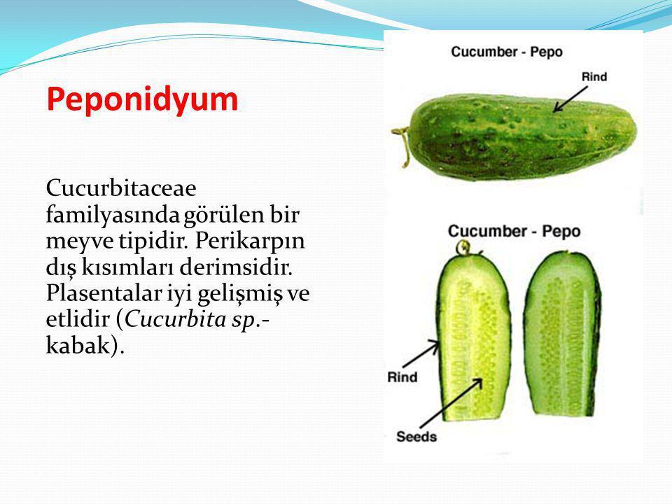 Peponidyum
