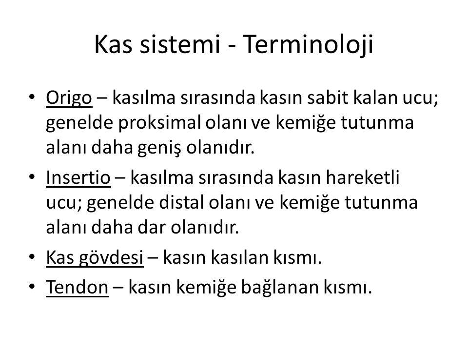 Kas sistemi - Terminoloji