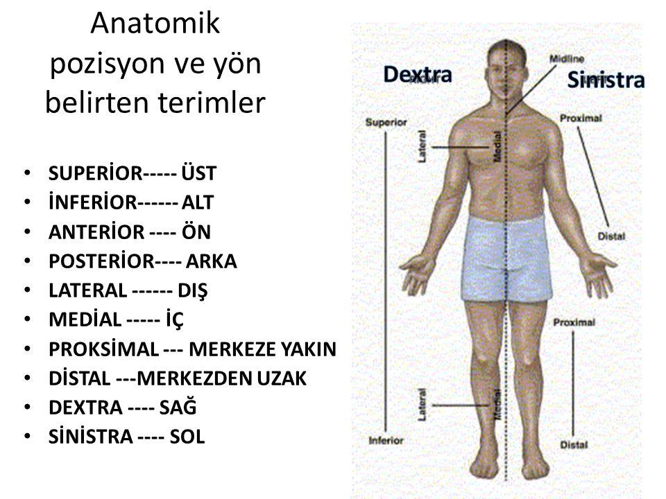 Anatomik pozisyon ve yön belirten terimler