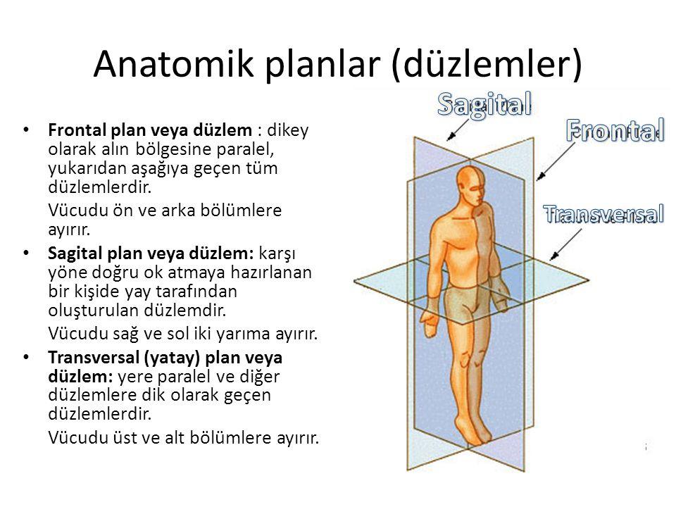 Anatomik planlar (düzlemler)