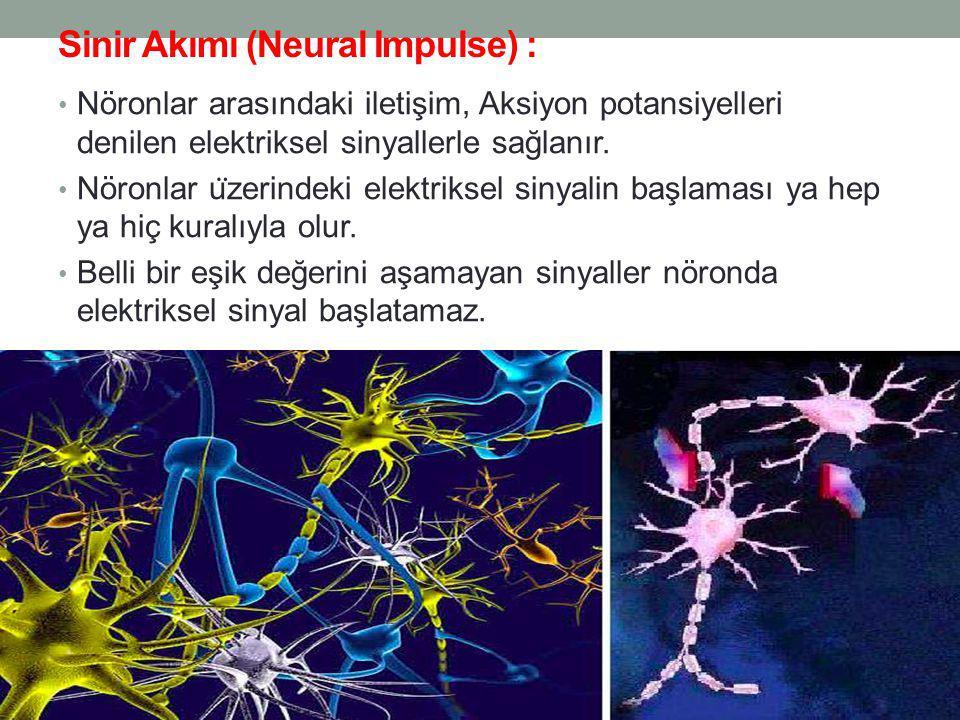 Sinir Akımı (Neural Impulse) :