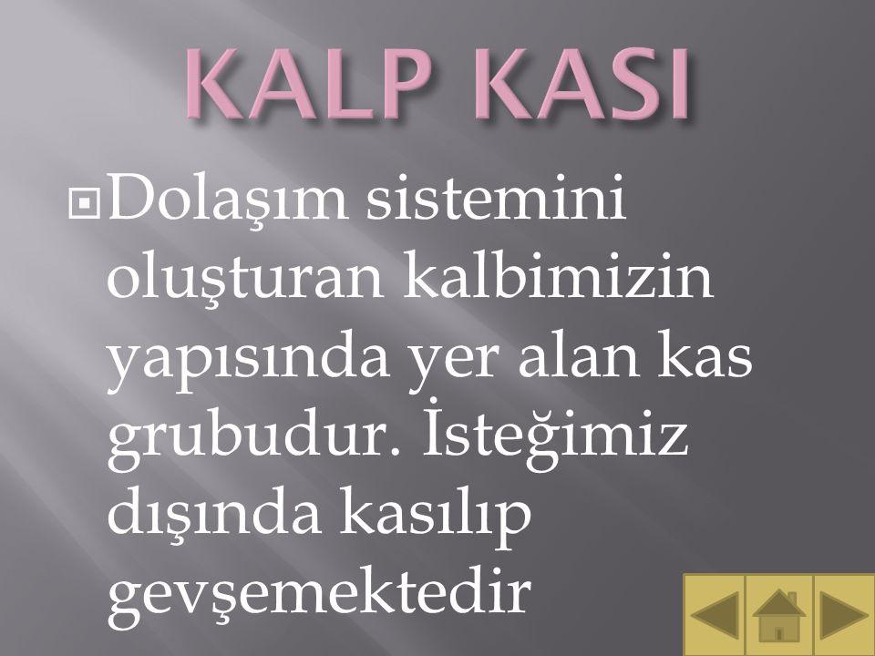 KALP KASI Dolaşım sistemini oluşturan kalbimizin yapısında yer alan kas grubudur.