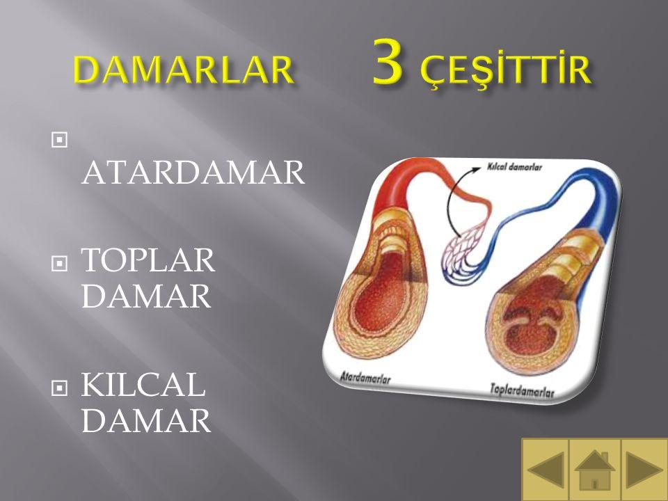 DAMARLAR 3 ÇEŞİTTİR ATARDAMAR TOPLAR DAMAR KILCAL DAMAR