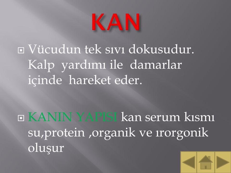 KAN Vücudun tek sıvı dokusudur. Kalp yardımı ile damarlar içinde hareket eder.