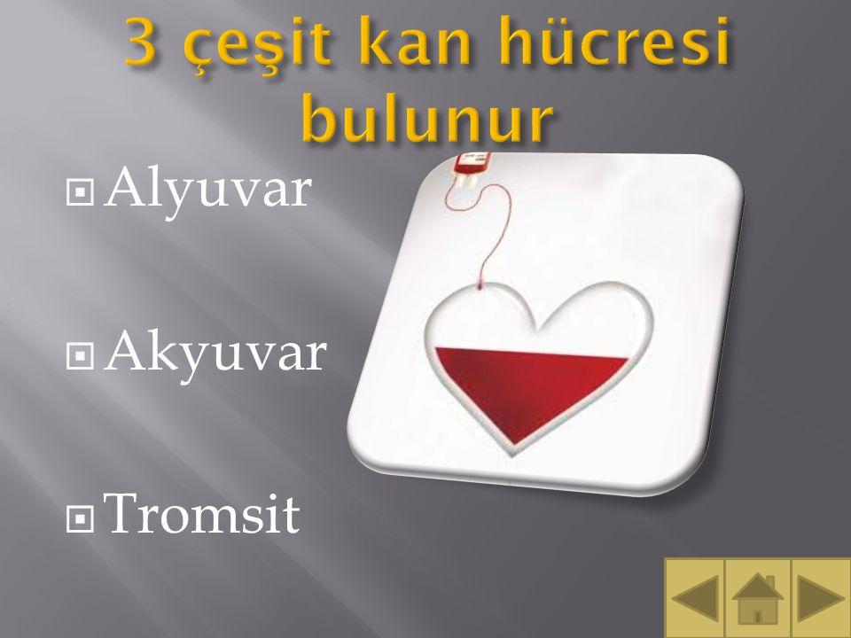3 çeşit kan hücresi bulunur