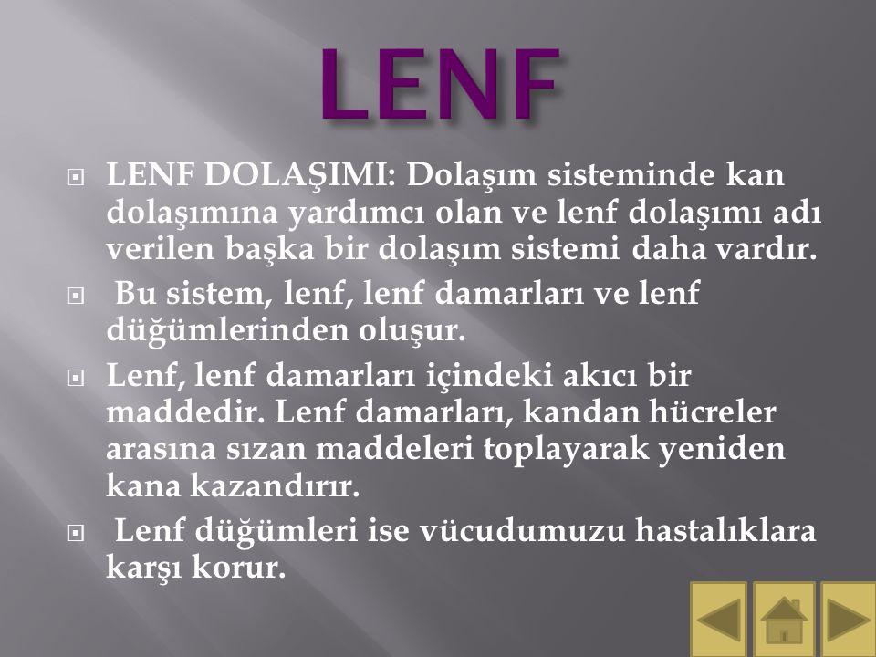 LENF LENF DOLAŞIMI: Dolaşım sisteminde kan dolaşımına yardımcı olan ve lenf dolaşımı adı verilen başka bir dolaşım sistemi daha vardır.