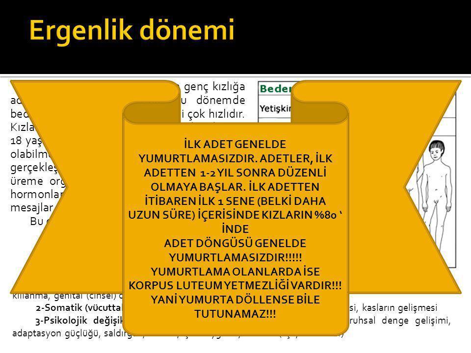 ADET DÖNGÜSÜ GENELDE YUMURTLAMASIZDIR!!!!!