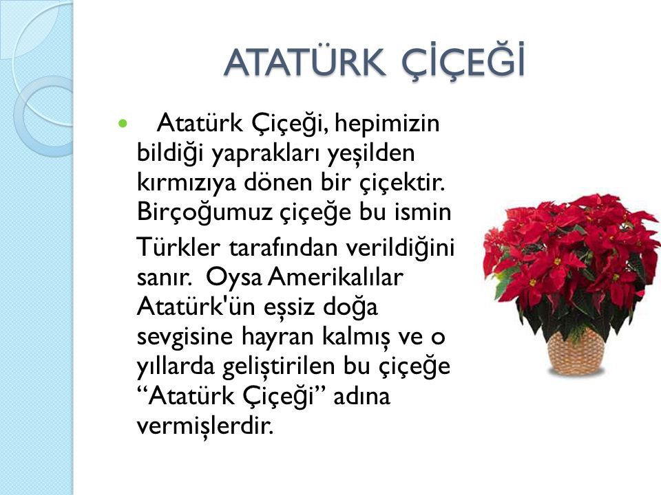 ATATÜRK ÇİÇEĞİ Atatürk Çiçeği, hepimizin bildiği yaprakları yeşilden kırmızıya dönen bir çiçektir. Birçoğumuz çiçeğe bu ismin.