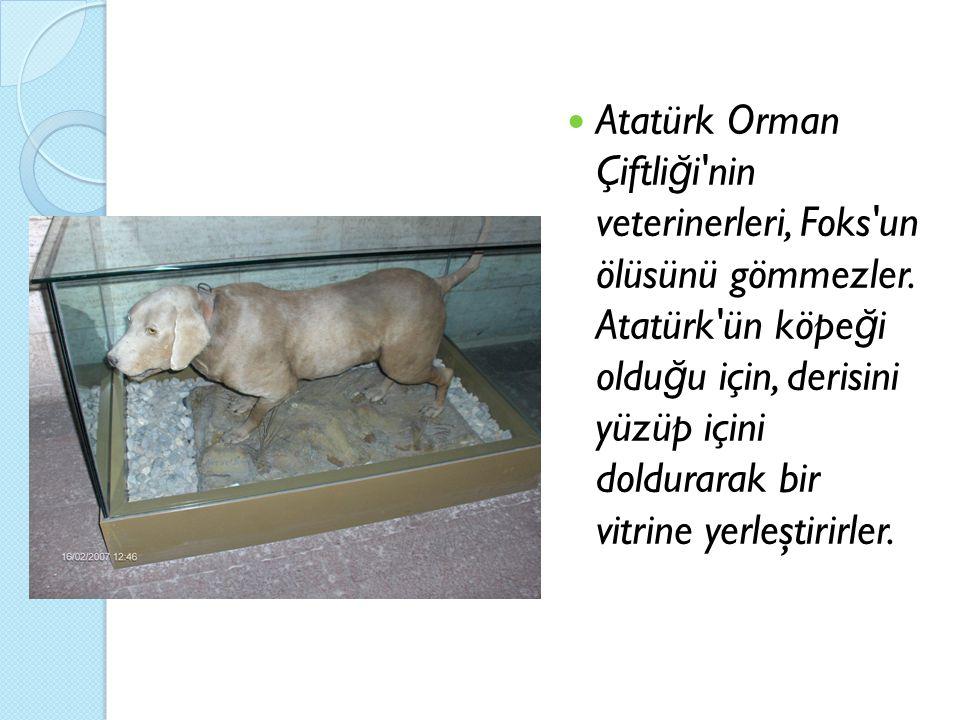 Atatürk Orman Çiftliği nin veterinerleri, Foks un ölüsünü gömmezler