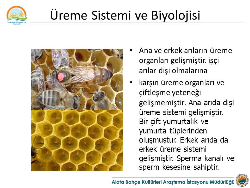 Üreme Sistemi ve Biyolojisi
