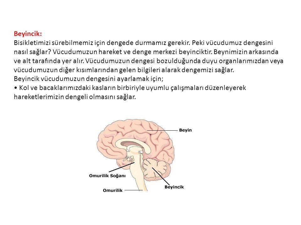 Beyincik: