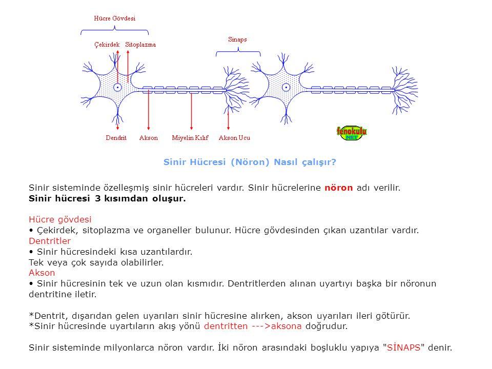 Sinir Hücresi (Nöron) Nasıl çalışır