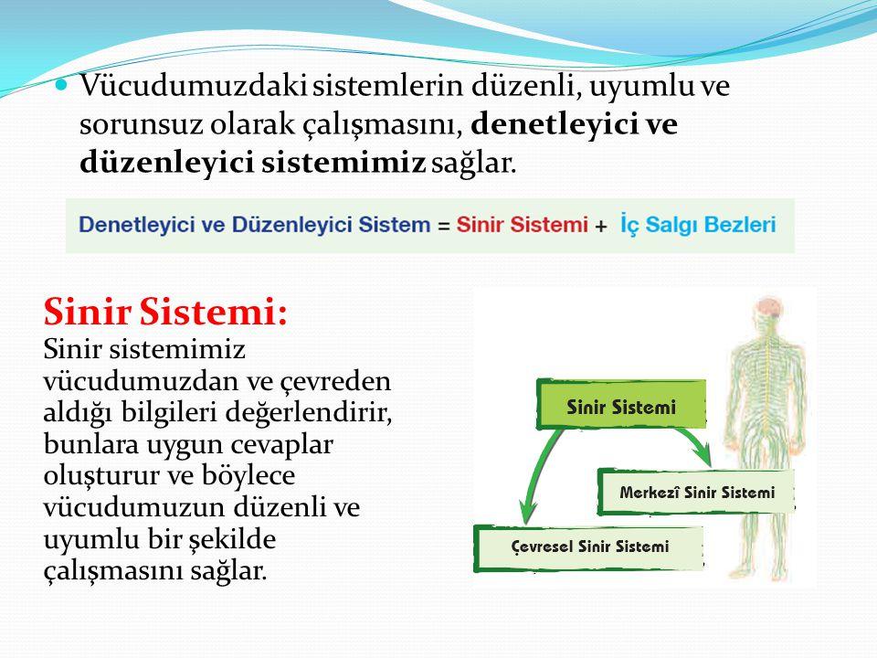 Vücudumuzdaki sistemlerin düzenli, uyumlu ve sorunsuz olarak çalışmasını, denetleyici ve düzenleyici sistemimiz sağlar.