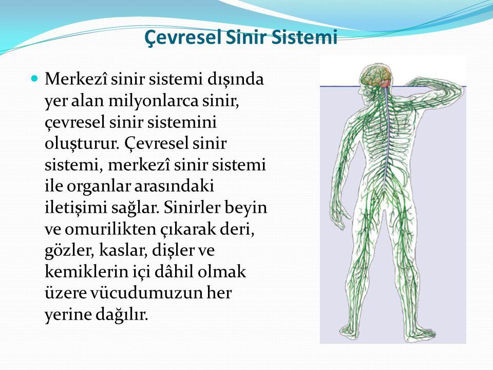 Çevresel Sinir Sistemi