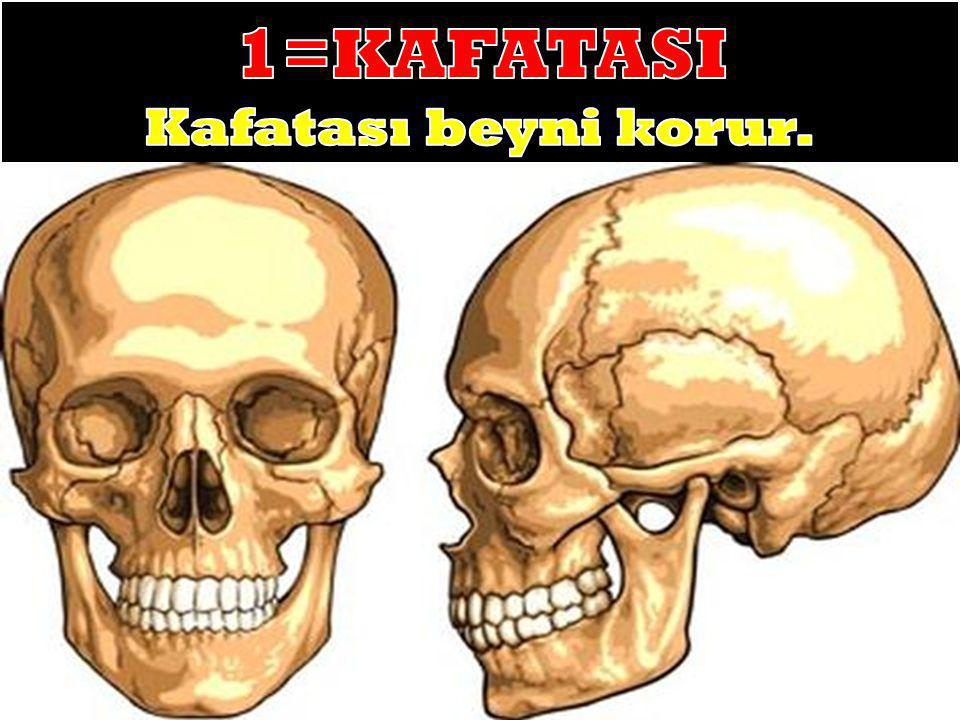 1=KAFATASI Kafatası beyni korur.