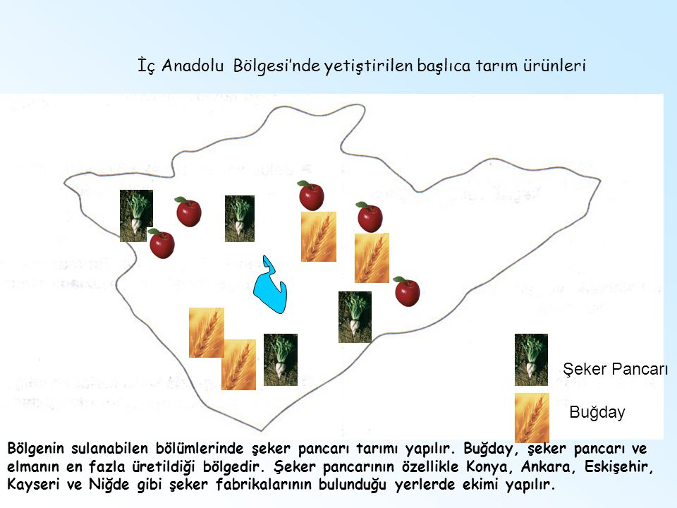 İç Anadolu Bölgesi'nde yetiştirilen başlıca tarım ürünleri