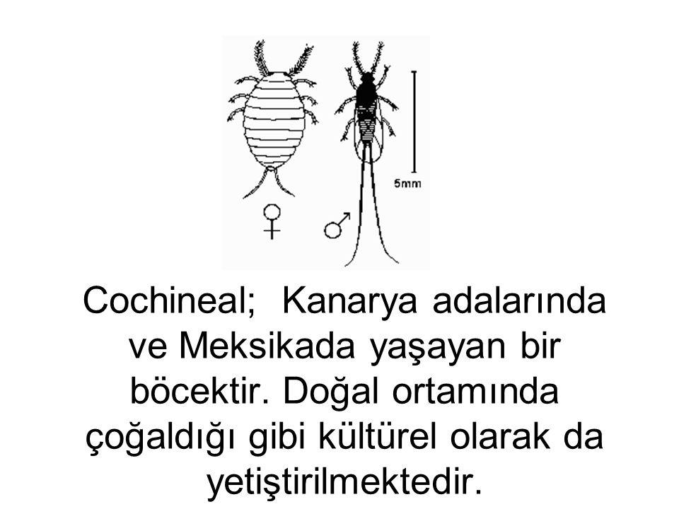 Cochineal; Kanarya adalarında ve Meksikada yaşayan bir böcektir