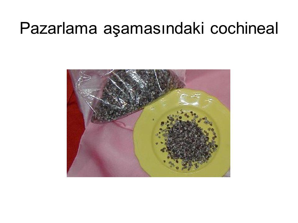 Pazarlama aşamasındaki cochineal