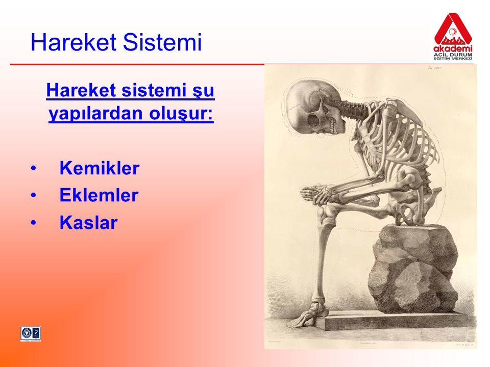 Hareket Sistemi Hareket sistemi şu yapılardan oluşur: Kemikler