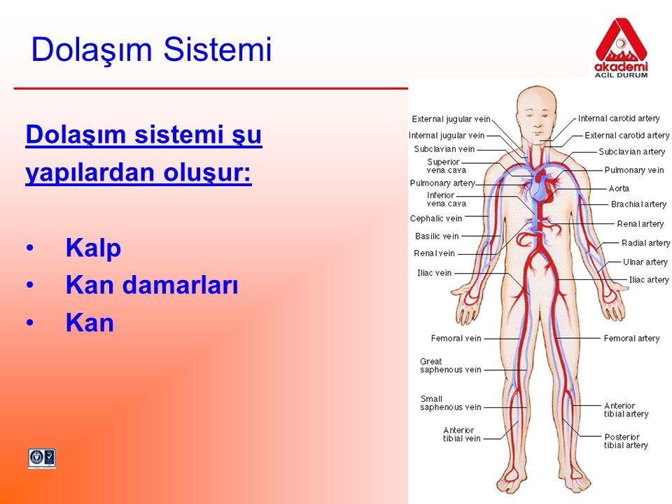 Dolaşım Sistemi Dolaşım sistemi şu yapılardan oluşur: Kalp