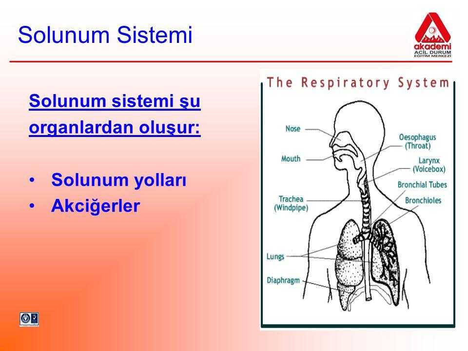 Solunum Sistemi Solunum sistemi şu organlardan oluşur: Solunum yolları