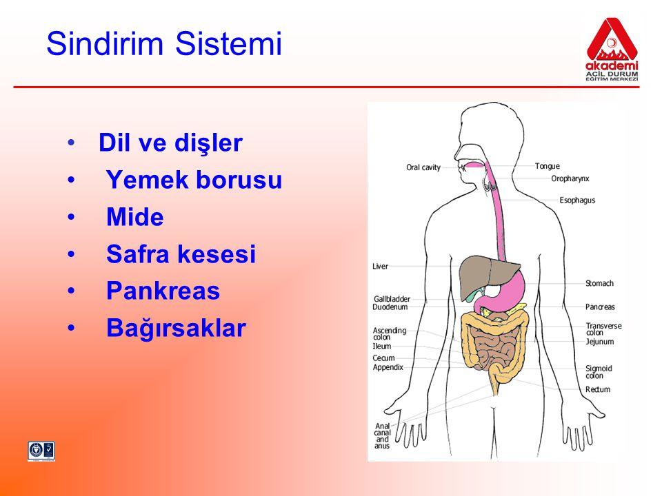 Sindirim Sistemi Dil ve dişler Yemek borusu Mide Safra kesesi Pankreas