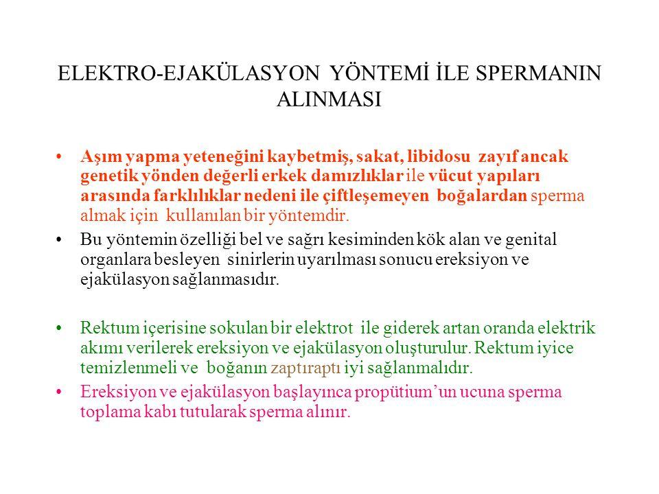ELEKTRO-EJAKÜLASYON YÖNTEMİ İLE SPERMANIN ALINMASI