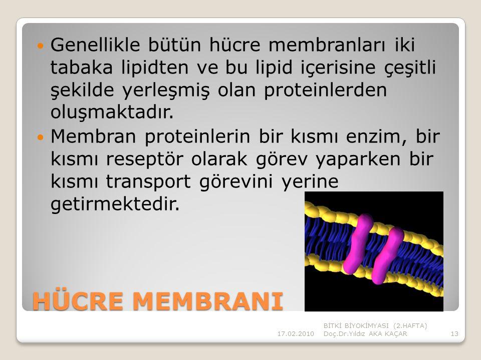 Genellikle bütün hücre membranları iki tabaka lipidten ve bu lipid içerisine çeşitli şekilde yerleşmiş olan proteinlerden oluşmaktadır.