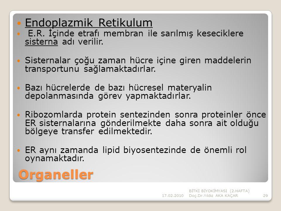 Organeller Endoplazmik Retikulum