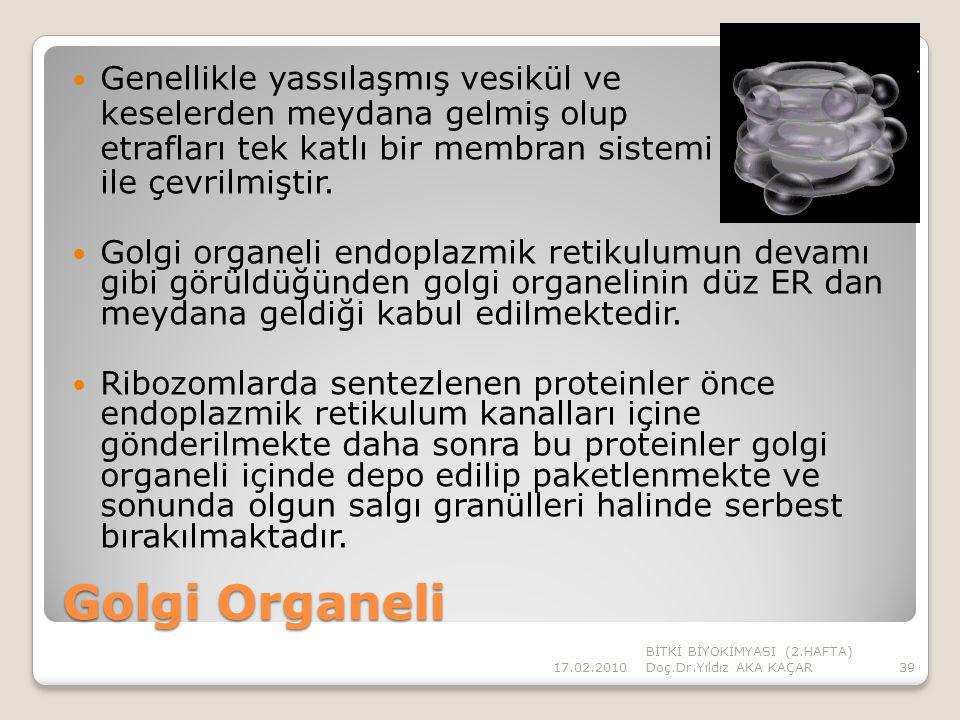 Golgi Organeli Genellikle yassılaşmış vesikül ve