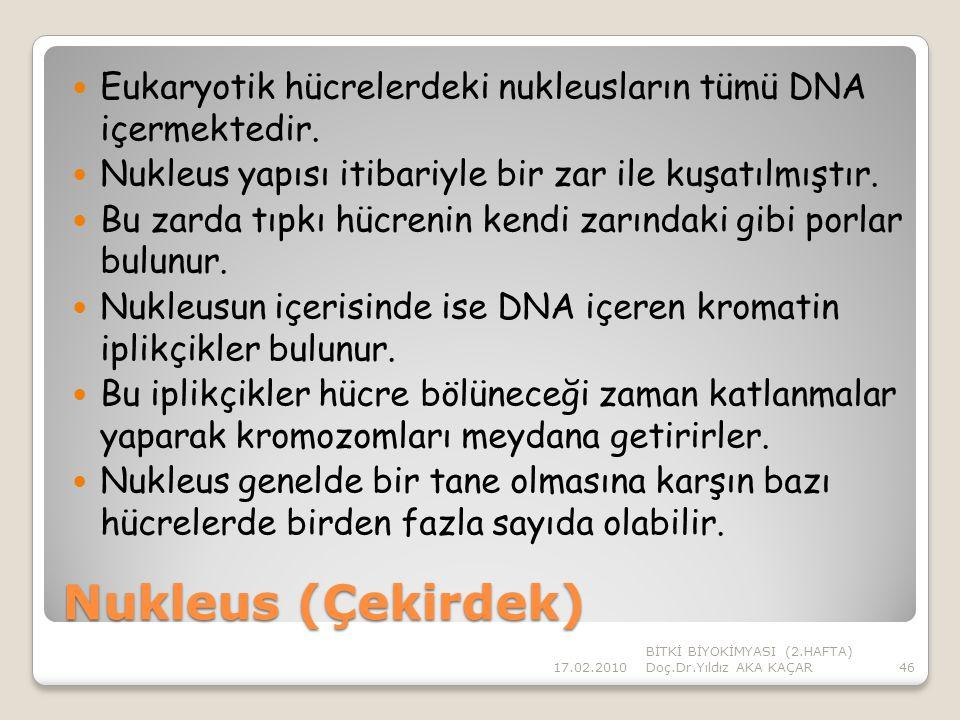 Eukaryotik hücrelerdeki nukleusların tümü DNA içermektedir.