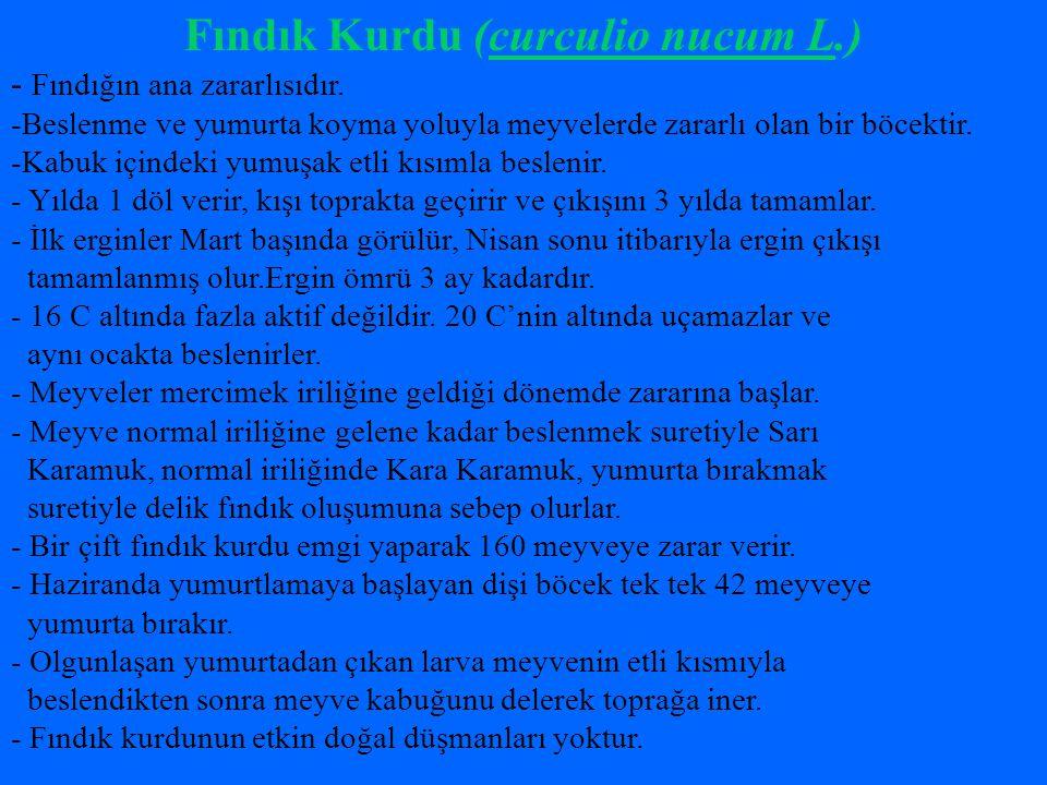 Fındık Kurdu (curculio nucum L.)