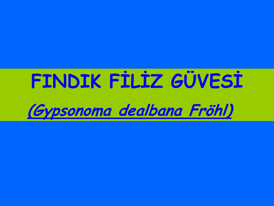 FINDIK FİLİZ GÜVESİ (Gypsonoma dealbana Fröhl)