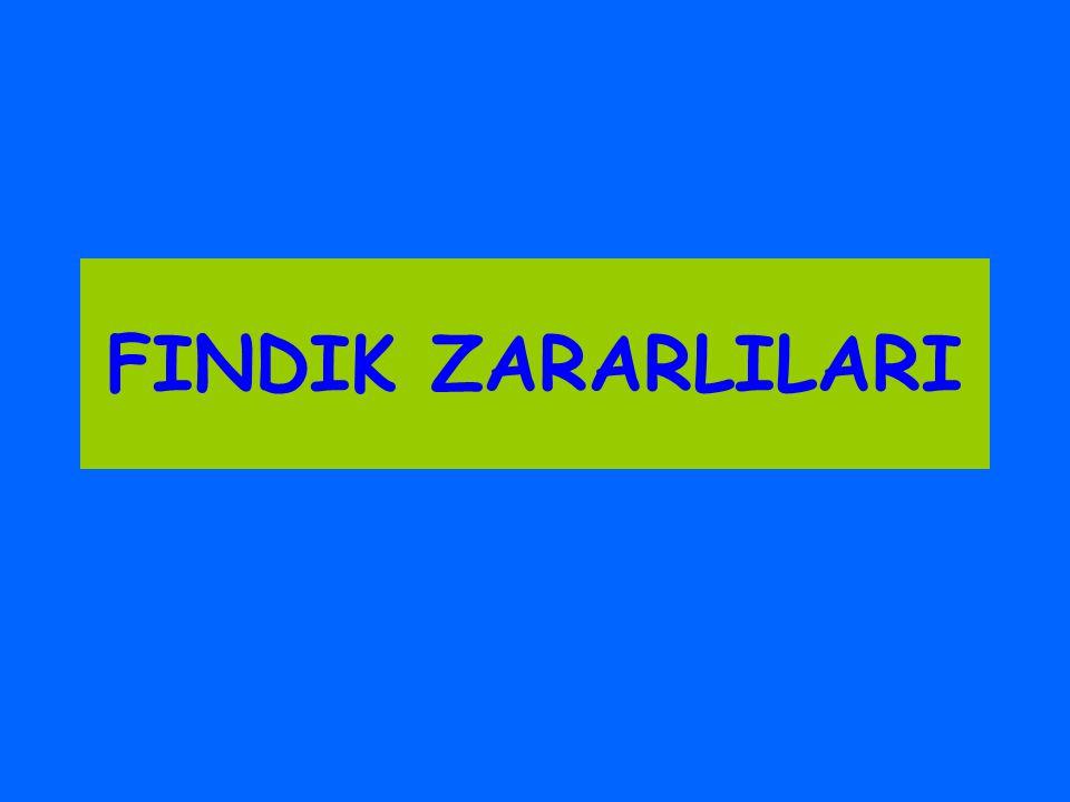 FINDIK ZARARLILARI