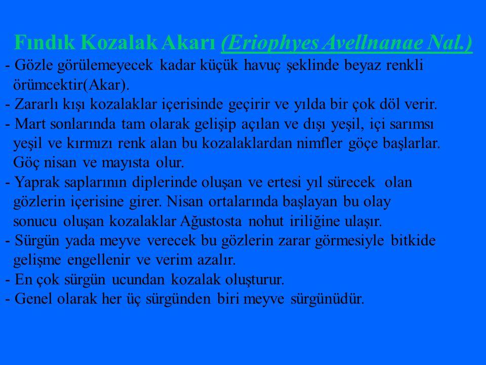 Fındık Kozalak Akarı (Eriophyes Avellnanae Nal.)