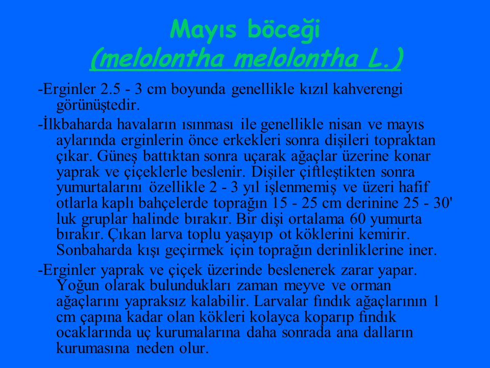 Mayıs böceği (melolontha melolontha L.)