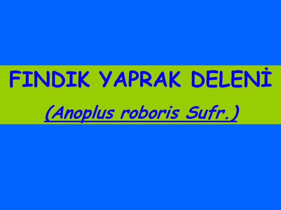 (Anoplus roboris Sufr.)