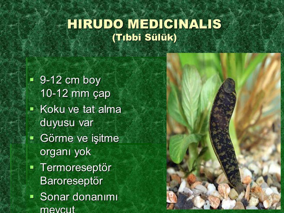 HIRUDO MEDICINALIS (Tıbbi Sülük)