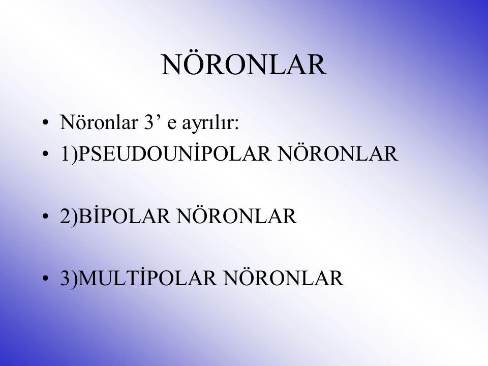 NÖRONLAR Nöronlar 3' e ayrılır: 1)PSEUDOUNİPOLAR NÖRONLAR