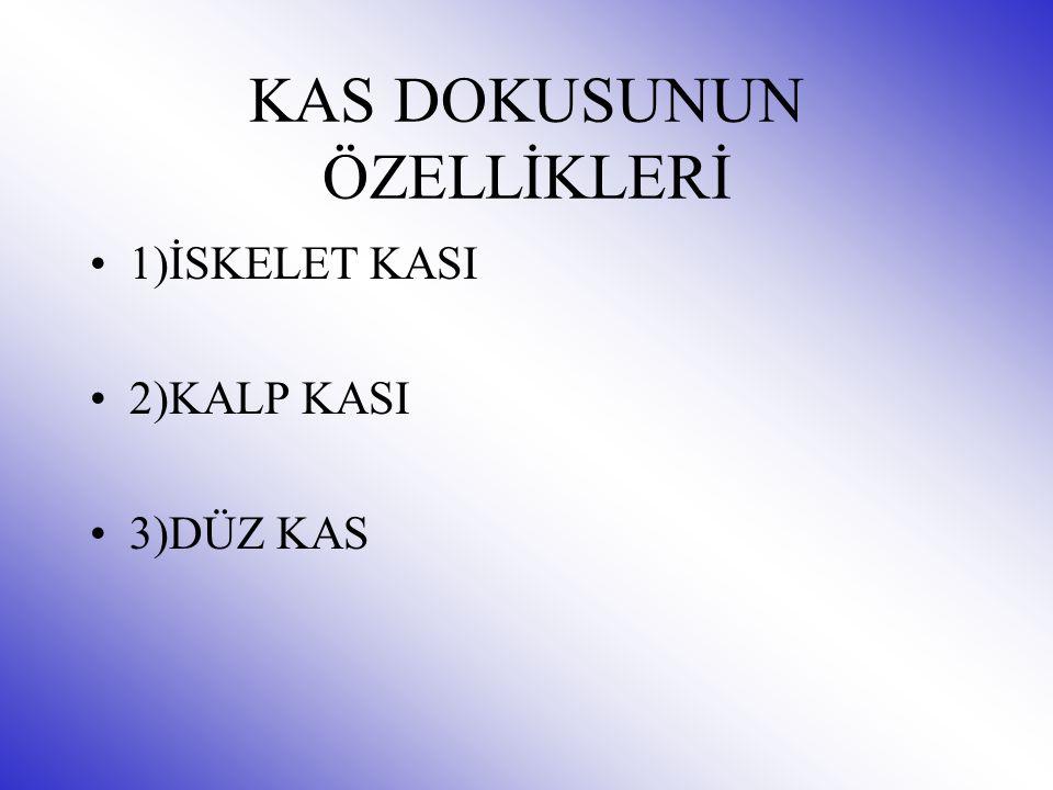 KAS DOKUSUNUN ÖZELLİKLERİ