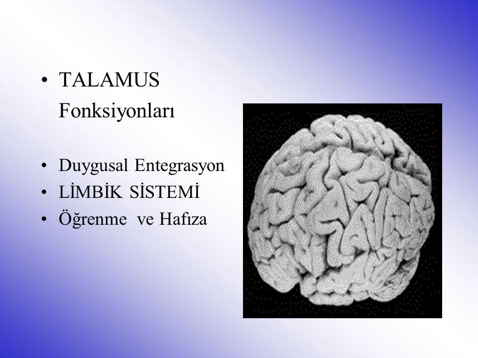 TALAMUS Fonksiyonları Duygusal Entegrasyon LİMBİK SİSTEMİ