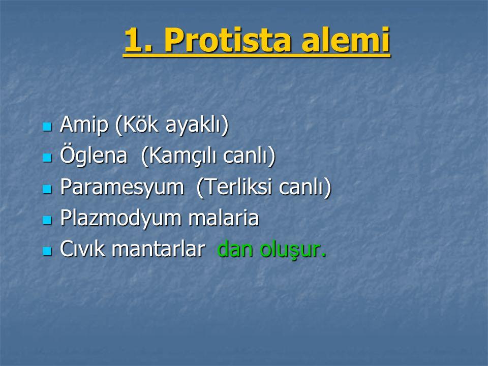 1. Protista alemi Amip (Kök ayaklı) Öglena (Kamçılı canlı)