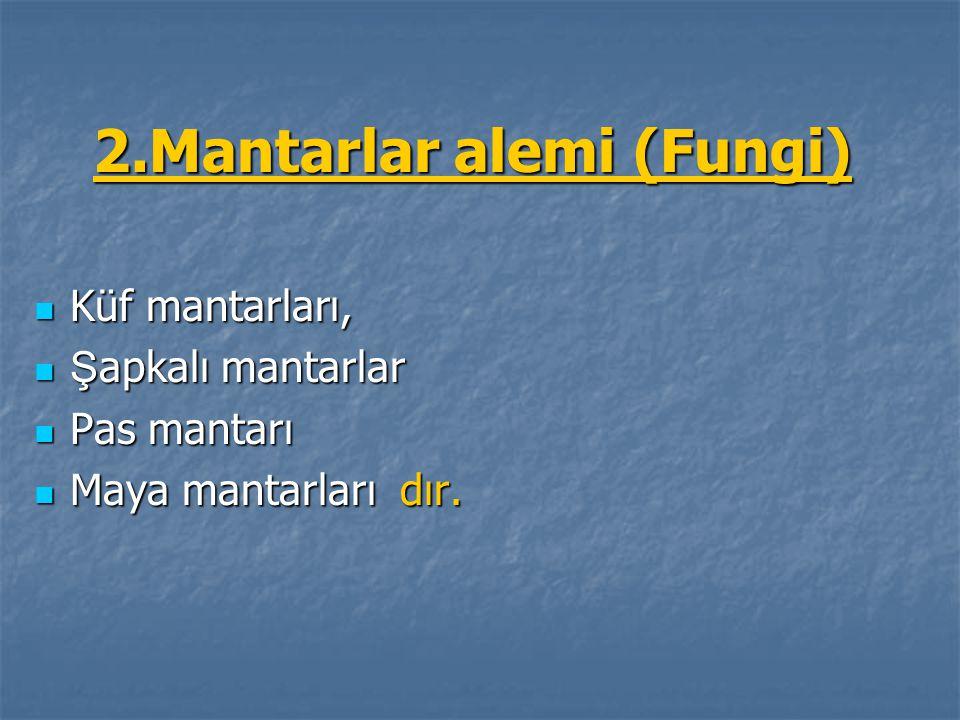 2.Mantarlar alemi (Fungi)