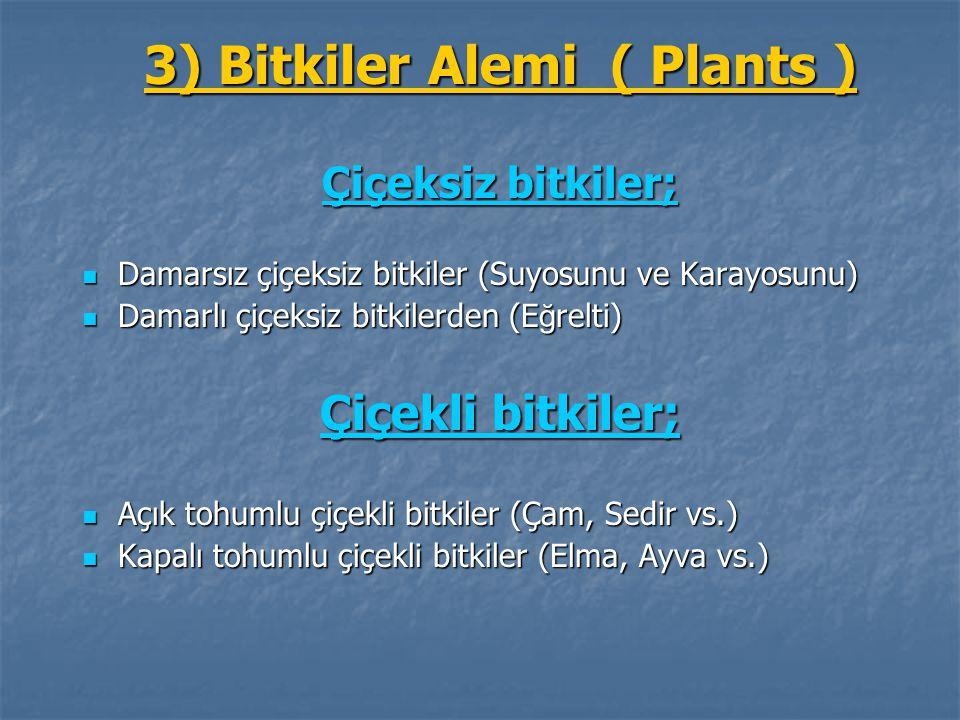 3) Bitkiler Alemi ( Plants )